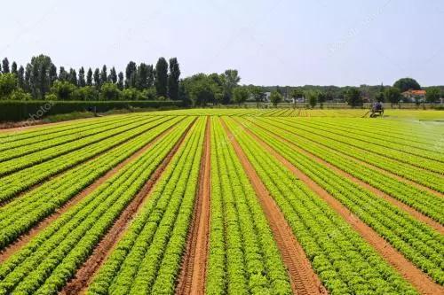 三农日报|百度进军农业4.0;农业生产个人最高补贴100万元