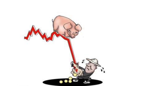 价格下跌成本上涨,禁养政策高压,都别灰心!这些补贴能帮你