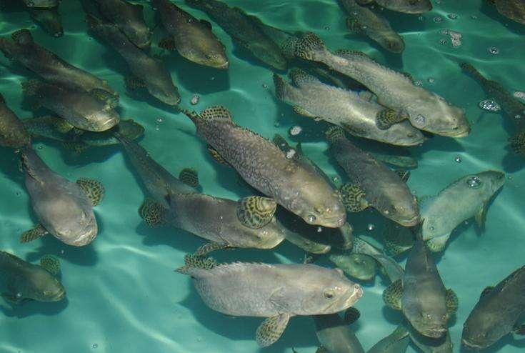 案例|养鱼日入10万的秘诀(可复制)