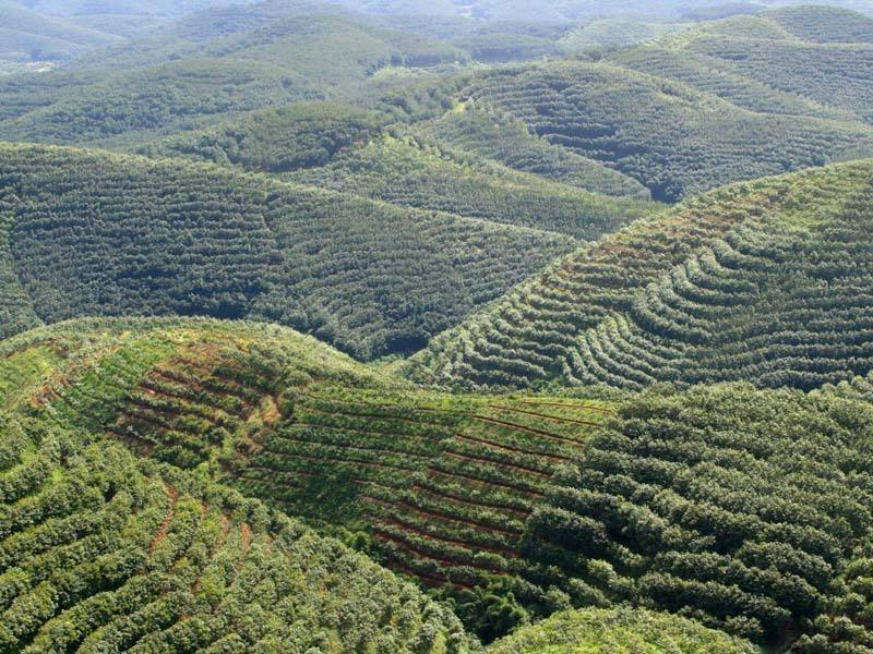 三农日报|京东要布局建数字农业;蛋鸭养殖或是条致富路