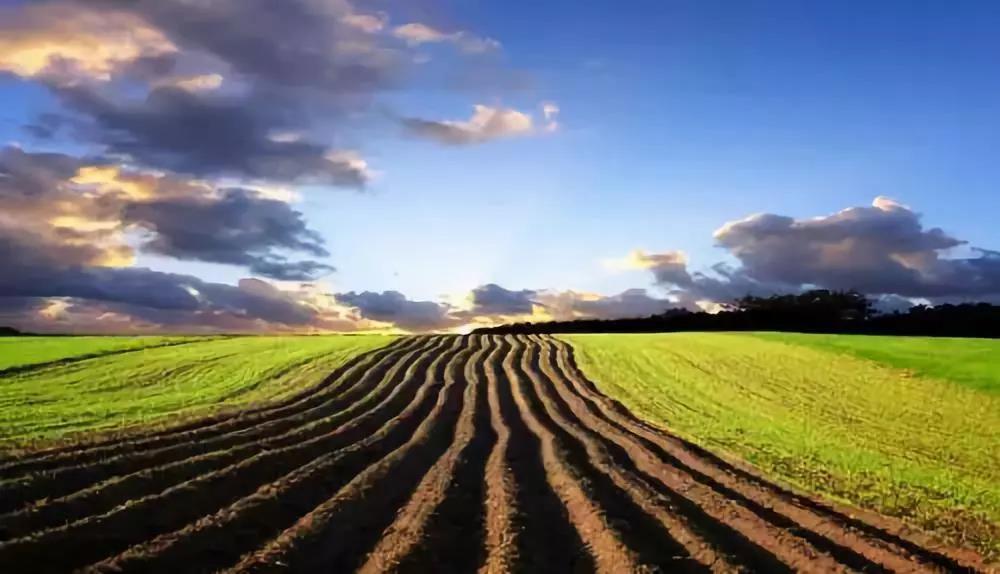 新政表明:我国将加大设施农业补贴; 中国养殖业大势已形成;我国新农人超1400万