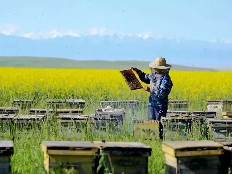 三农日报|2018我国对养蜂机械敞开补贴;乙醇汽油能否帮助中国农业;