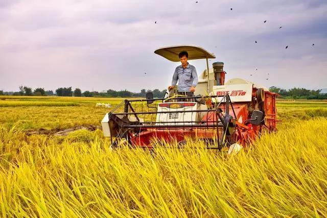 农业农村部:欢迎外商投资种业;我国饲料行业和养殖业将呈现规模化和集团化趋势