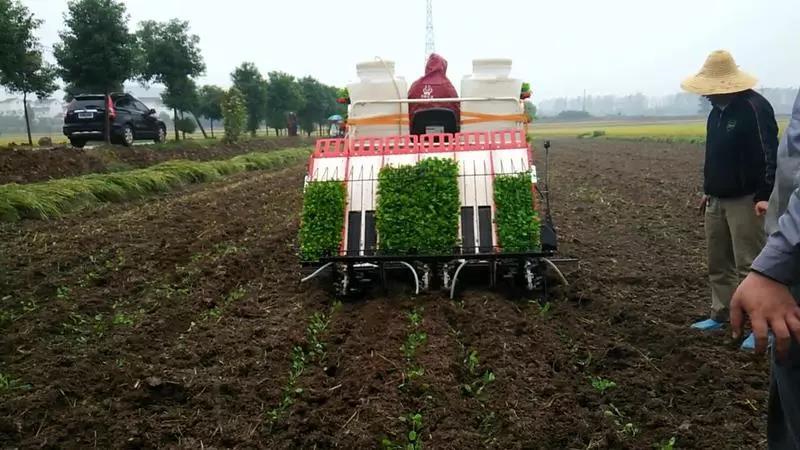 三农日报 2019年我国大豆种植面积有望扩大;中科院:找到水稻硒转运有效途径