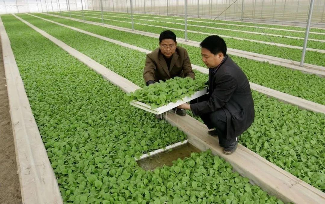 三农日报|2019数字农业或将大爆发;分析称:未来生猪养殖利润缩小