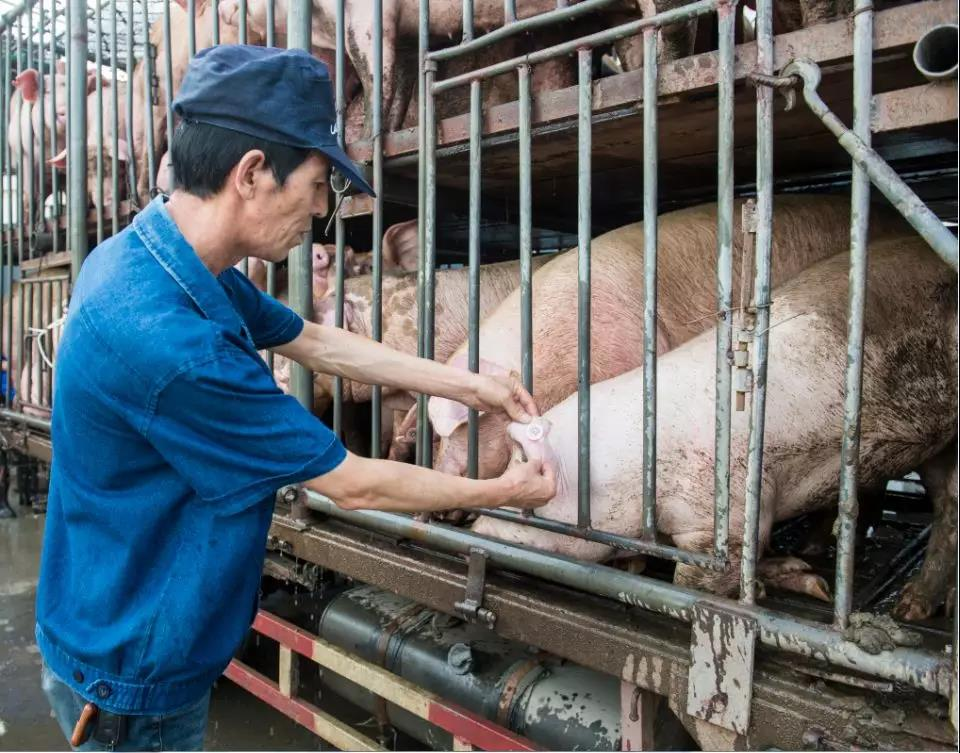 三农日报 黑龙江养殖场重点区将安装监控;湖北养殖废弃物直排入江最高罚5万