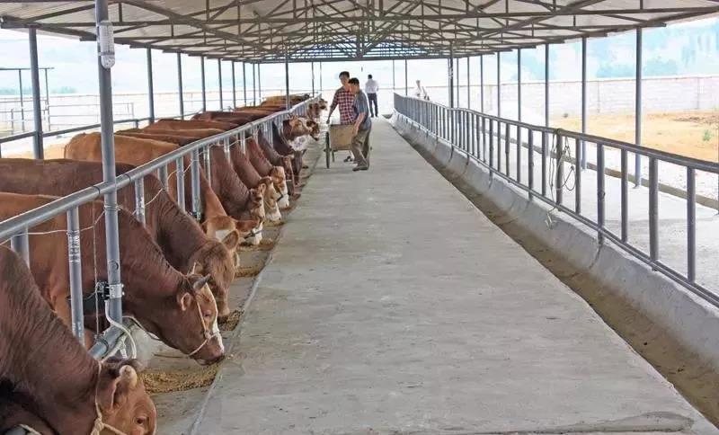 权威公示 农业农村部畜禽养殖标准化示范场名单(暴富机会来了)