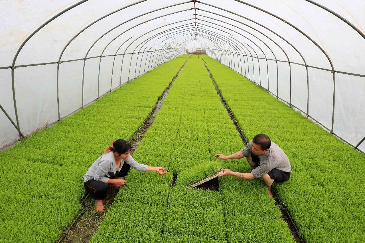 三农日报|地方政府支持农旅融合发展新模式;国家推动土地经营权入股