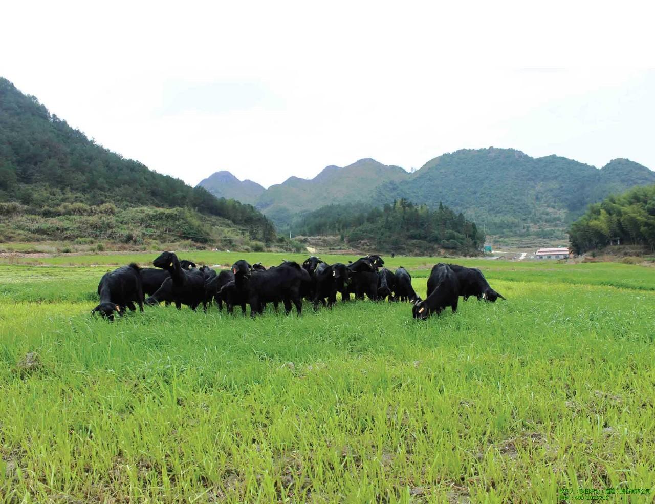 新模式|另类农业新模式,农牧结合,你了解多少?