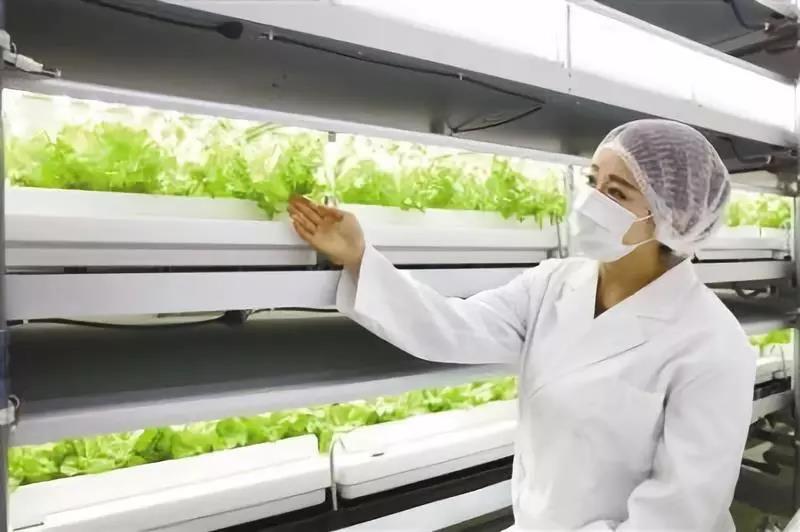 三农日报|新动向!畜禽种业或迎来投资风口;生物农药成美国市场主流