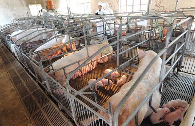 看美国生猪产销调运对我国的启示