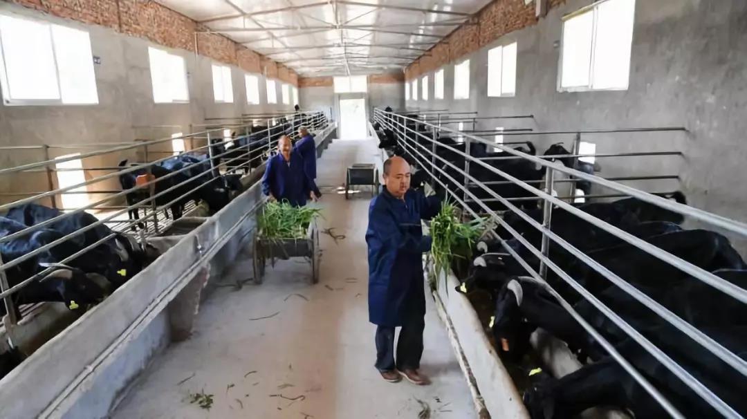2019养殖模式裂变:产业融合、生态方向、循环经济成主流