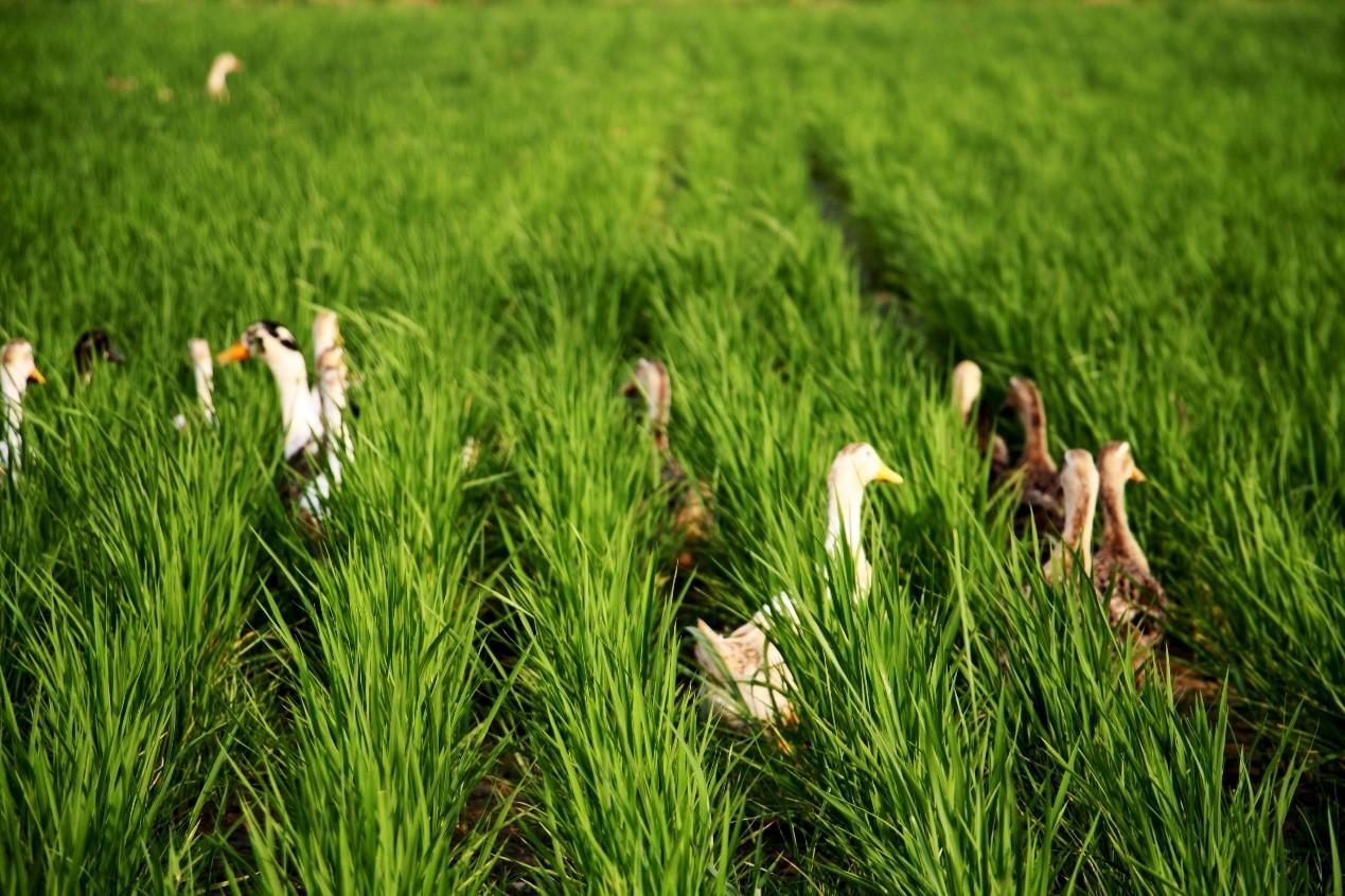 新模式|想做循环农业?这几种模式值得参考!