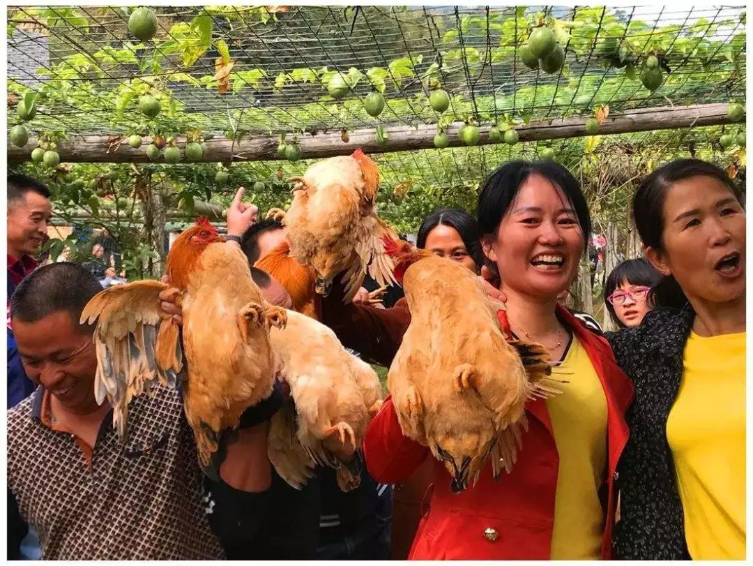 1000万起家,她构建食物链养鸡,还发力乡村生态旅游