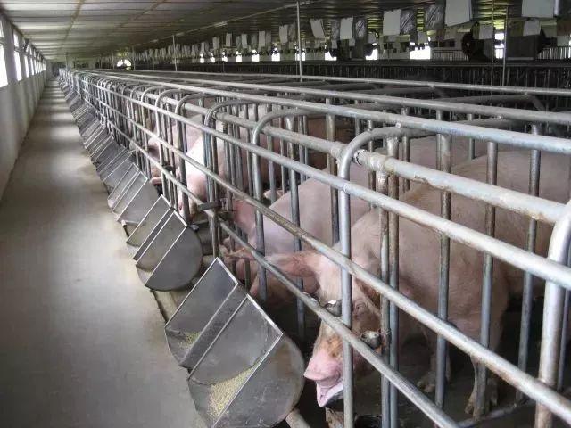 政策|最高补助5000万,中央财政继续支持畜禽粪污资源化利用