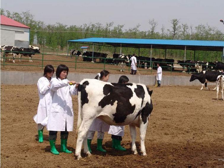 农业农村部:对兽药经营活动全面实施追溯管理