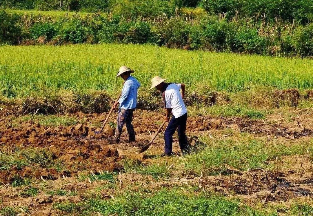 三农日报 亚洲农业食品业最大机遇或在中国;农业生产性服务规模将达万亿元