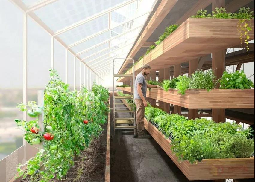 三农日报|中国尚未批准转基因粮食作物商业化种植;农业服务规模化效应逐步显现
