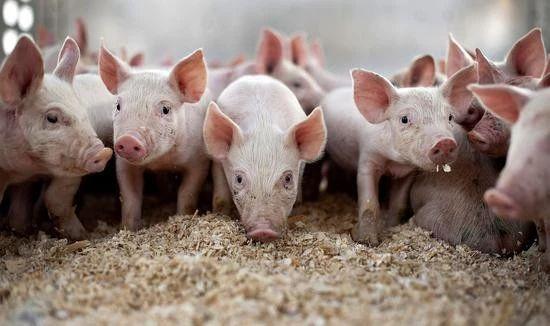 2019年中国饲料行业市场竞争格局:新希望、海大、双胞胎、正大为第一梯队