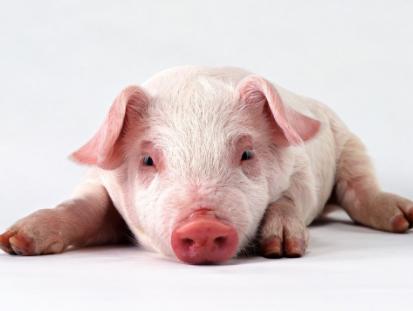 十大案例公布!猪场使用自家苗被罚5万