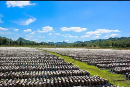 农业农村部:2020年重点支持创建优质粮油、健康养殖、现代种业产业园