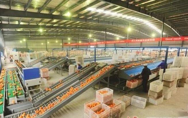 三农日报|国家支持民营企业发展养猪;分析:新电商平台重塑农产品供应链