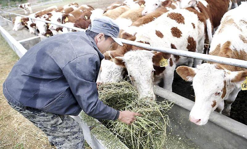 【养殖行业】饲料原料大涨,牛羊畜禽价格有望跟涨!