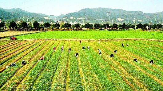 三农日报|行业机构:家禽行业每天损失达3亿元;我国生态农业的三种模式
