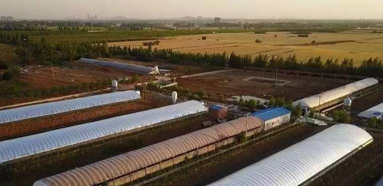 """""""建楼养猪""""模式新实验:首农投入9亿元,养猪种菜两不误"""