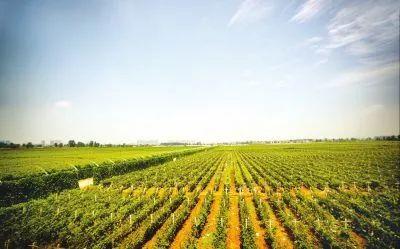 基金经理姚爽详析中国农业产业的三个趋势和投资逻辑