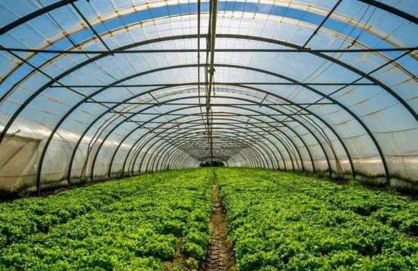 农业产业周报|海大集团、三只松鼠、圣农发展、温氏股份最新动态