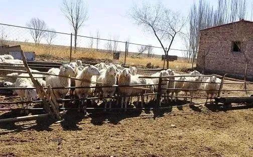 【政策】养殖用地审批慢?若满足这4个条件,农民可以先建设,别再犹豫了