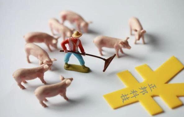 生猪养殖疑云:营收利润达几十亿,为何牧原、正邦还要借钱养猪