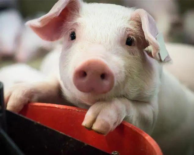 【政策】国务院办公厅关于促进畜牧业高质量发展的意见
