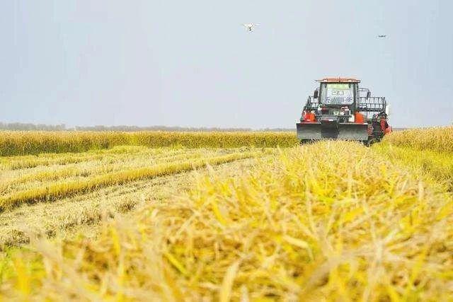 三农日报|政策:大力发展认养农业、都市农业;刘永好:养猪格局正发生变化