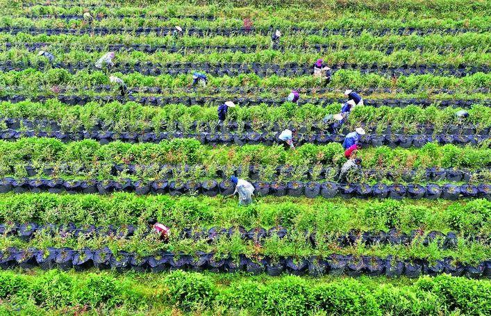 三农日报|政策:我国要大力发展林下经济;刘畅:养猪企业竞争取决于成本