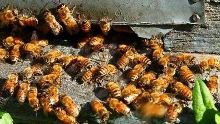 【实操案例】创业鬼才!500箱蜜蜂,400万的年销售额!看他如何缔造神话?