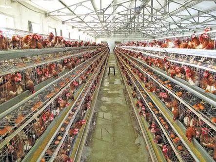 【政策解读】国土资源部发布养殖用地新规定,建养殖场必须符合这几个条件!