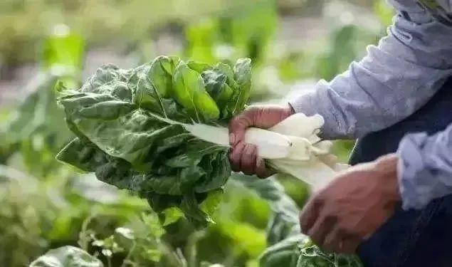 农业产业周报|先正达、巨星农牧、大北农、金龙鱼最新动态;本周4例资本事件