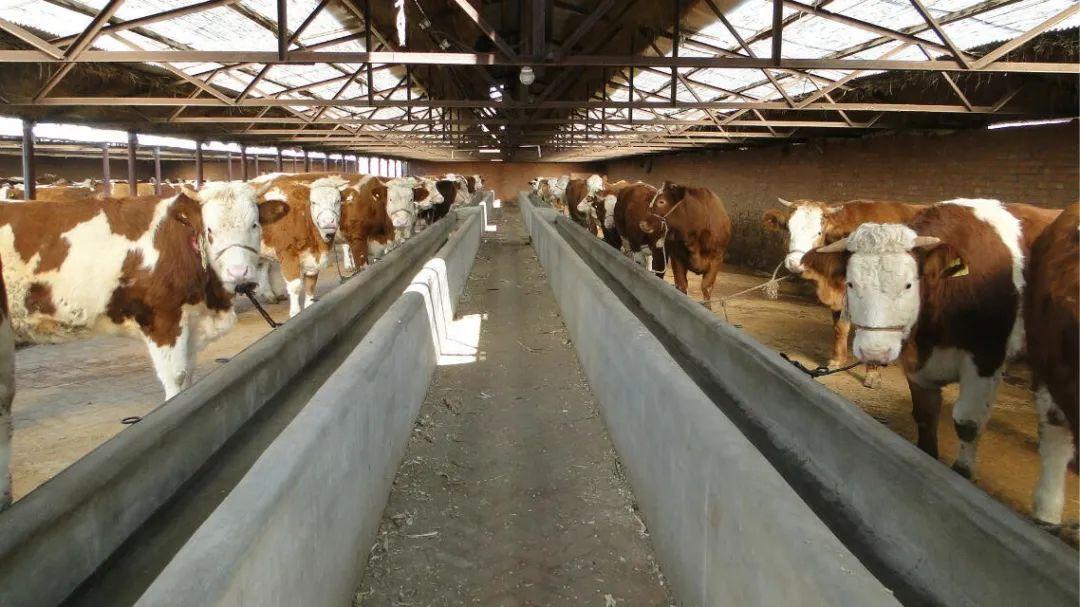 【经营知识】新建养殖场需要办理的证件及流程