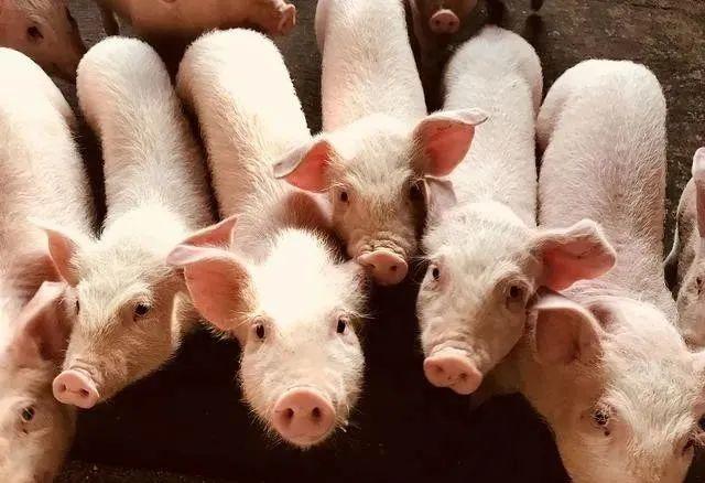 【深度剖析】生猪养殖行业研究:对猪周期的再思考,变与不变
