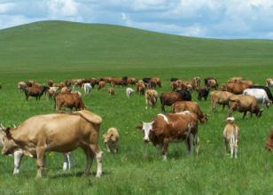 未来养殖行业的发展趋势