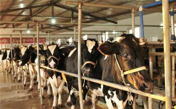 市场丨2016年下半年养牛前景怎么样?