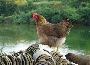 干货:养殖扶持政策及申报方法