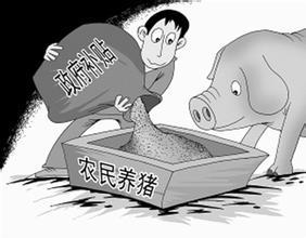 今年最新养猪补贴究竟有哪些?