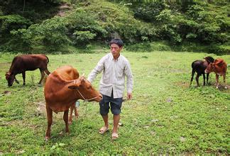 农村致富|做农村养殖业,不知道怎么申请无息贷款?