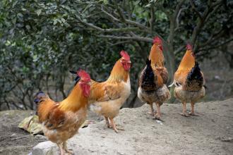 国内畜牧养殖业发展需要思考的几个转变