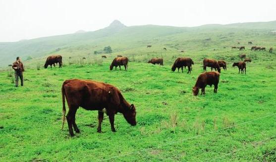 2017农业农村经济工作部署在即 养殖业成绿色农业重点突破口