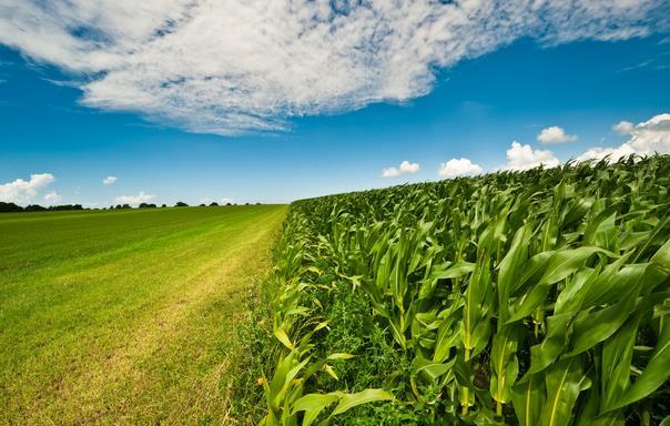 单价跌至1元以下、调减达3000万亩、玉米企业如何转型升级