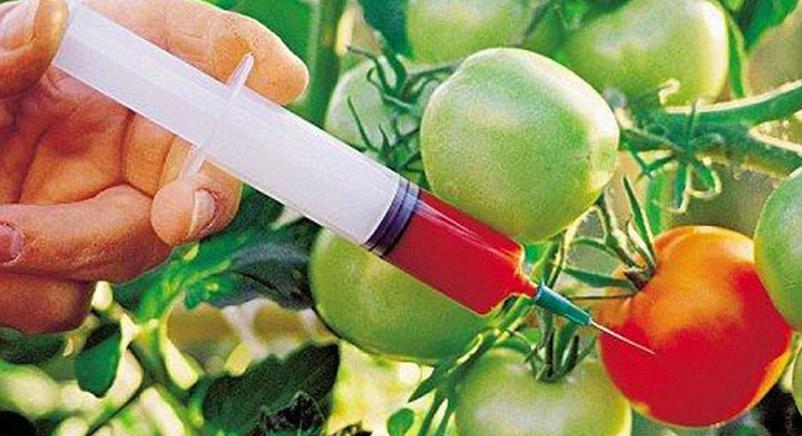 种植转基因农作物,我们该不该禁止